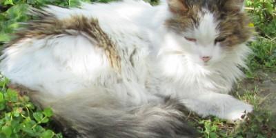 Anawim Cat 2